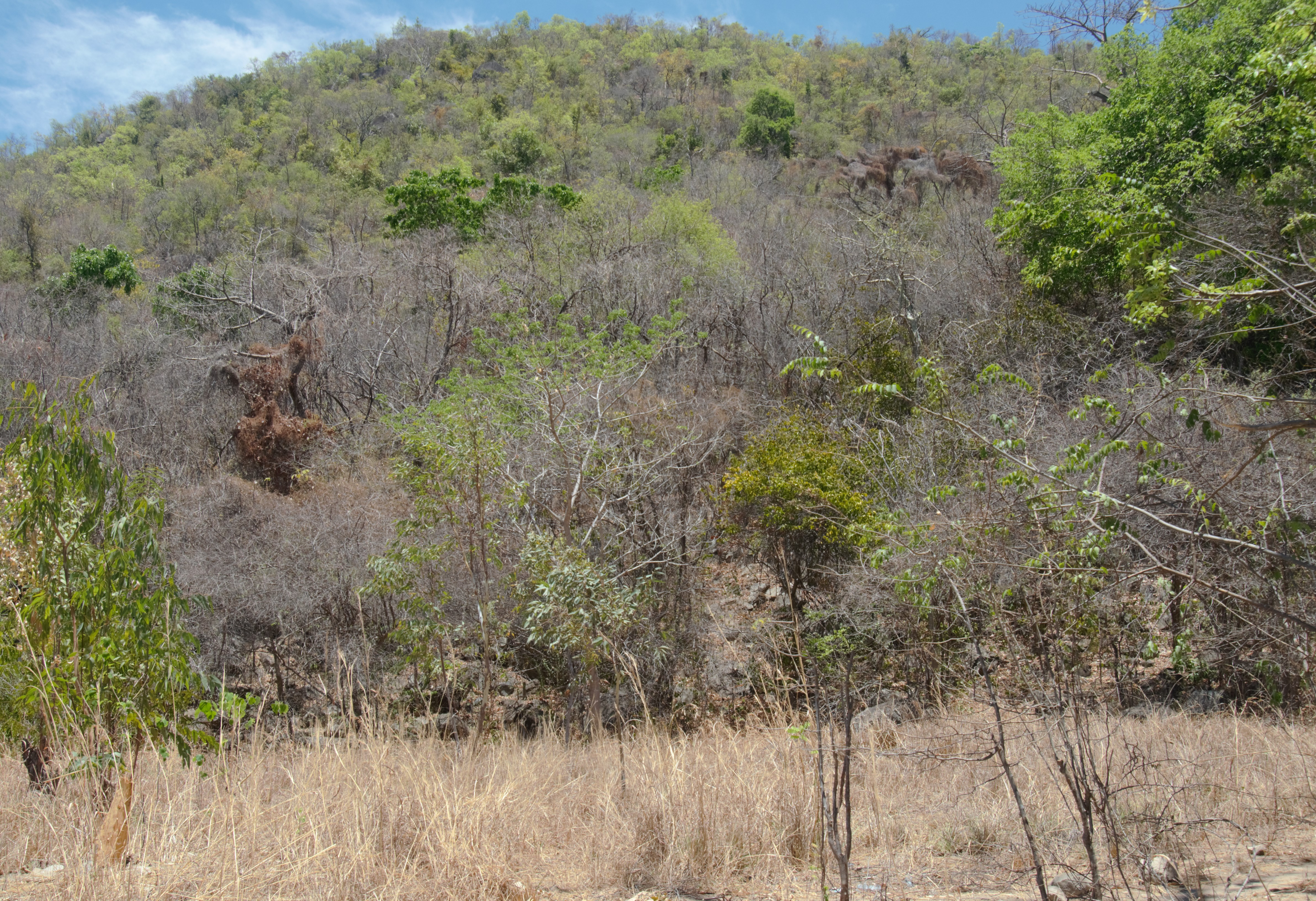 Department of Forestry Engages Communities in Conservation of Forests